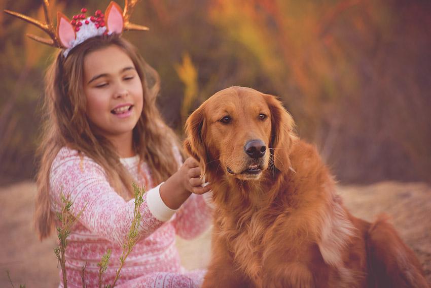 golden retriever christmas photo