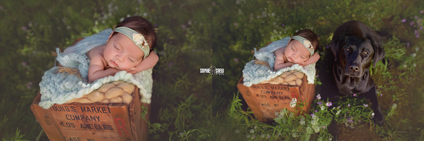 Cute newborn girl in a wooden box outdoor in Southern California