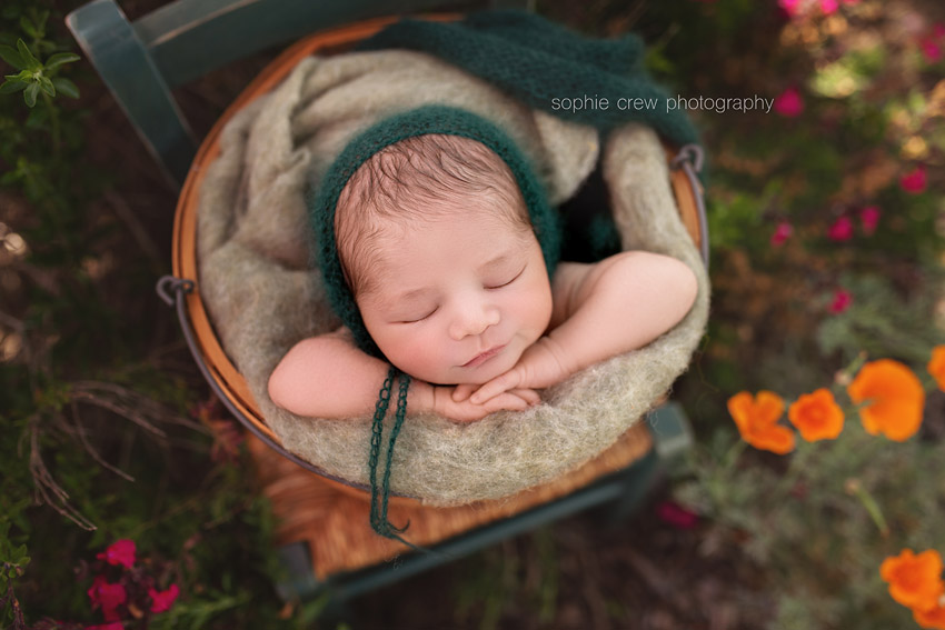 Newborn in basket on chair in garden surrounded by California poppies