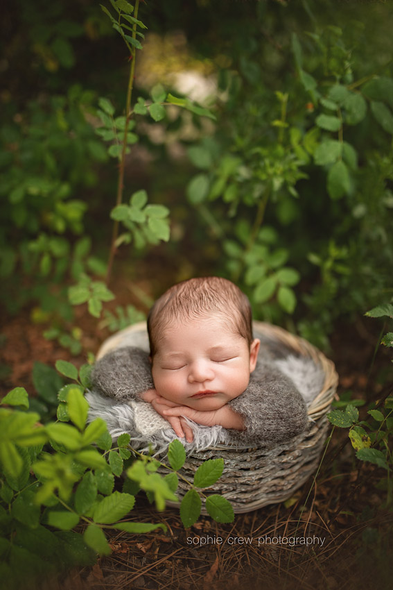 newborn boy posed in wooden basket for outdoor photo session in San Diego