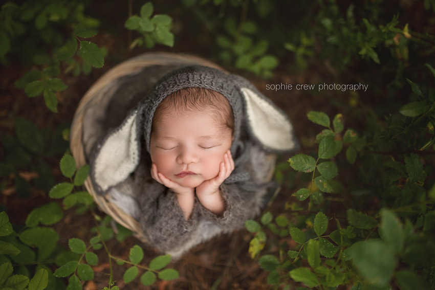 newborn dressed as a little lamb for newborn photos