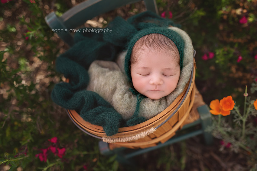 Newborn in basket outside for garden newborn photos
